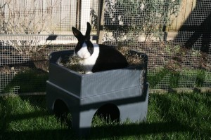 Picture of a rabbit in the Feline Fort®